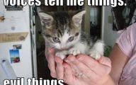 Funny Cute Cat  10 Free Wallpaper