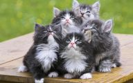 Funny Cute Cat  11 Background Wallpaper