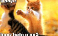 Funny Cute Cat  13 Widescreen Wallpaper