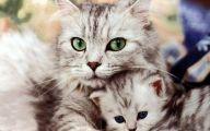 Funny Cute Cat  3 Desktop Wallpaper