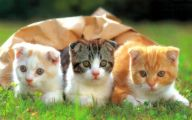 Funny Cute Cat  5 Hd Wallpaper