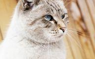 Funny Cute Cat  6 Desktop Background