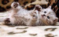 Funny Cute Cat  8 Desktop Wallpaper