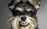 Funny Dog Animations 15 Hd Wallpaper