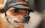 Funny Dog Animations 2 Cool Wallpaper