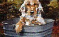 Funny Dog Art 28 Background
