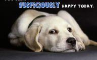 Funny Dog Art 5 Desktop Wallpaper