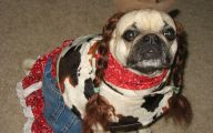 Funny Dog Bandanas 25 Desktop Wallpaper