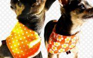 Funny Dog Bandanas 3 Background