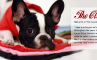 Funny Dog Bandanas 32 Widescreen Wallpaper