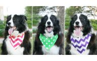 Funny Dog Bandanas 9 Free Wallpaper