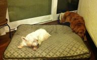 Funny Dog Bed 20 Free Wallpaper