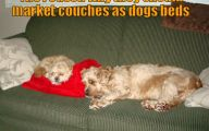 Funny Dog Bed 21 Desktop Wallpaper