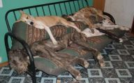 Funny Dog Bed 22 Background Wallpaper