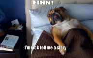 Funny Dog Bed 24 Cool Hd Wallpaper