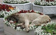 Funny Dog Bed 26 Widescreen Wallpaper