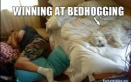 Funny Dog Bed 30 Hd Wallpaper