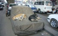 Funny Dog Bed 31 Widescreen Wallpaper