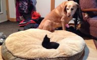 Funny Dog Bed 34 Background