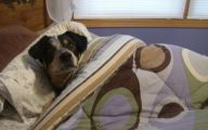 Funny Dog Bed 9 Cool Hd Wallpaper