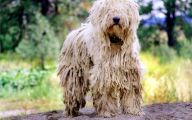 Funny Dog Breed Combinations 2 Free Wallpaper