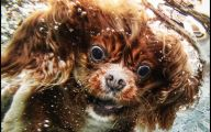 Funny Dog Breed Combinations 23 Background Wallpaper