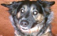 Funny Dog Breed Mixes 10 Desktop Wallpaper