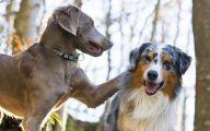 Funny Dog Breed Mixes 12 Wide Wallpaper