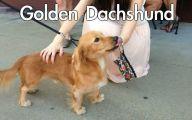 Funny Dog Breed Mixes 38 Free Wallpaper