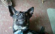 Funny Dog Breed Mixes 6 Desktop Background