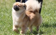 Funny Dog Breed Names 10 High Resolution Wallpaper