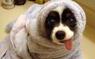 Funny Dog Breed Names 13 Desktop Wallpaper