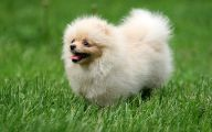 Funny Dog Breed Names 18 Hd Wallpaper