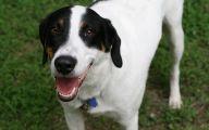 Funny Dog Breed Names 2 Cool Hd Wallpaper