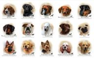 Funny Dog Breed Names 22 Desktop Background
