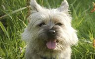Funny Dog Breed Names 28 Cool Hd Wallpaper