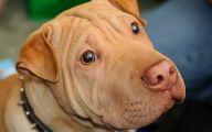 Funny Dog Breed Names 9 Free Wallpaper