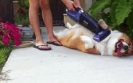 Funny Dog Clips Download 10 Widescreen Wallpaper
