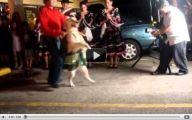 Funny Dog Dancing 16 Wide Wallpaper