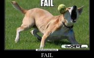 Funny Dog Fails 13 Free Wallpaper