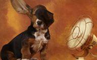 Funny Dog Fails 19 Free Hd Wallpaper