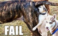Funny Dog Fails 20 Desktop Background