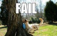Funny Dog Fails 23 Desktop Background