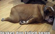 Funny Dog Fails 24 Hd Wallpaper
