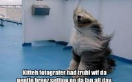 Funny Dog Fails 25 Hd Wallpaper