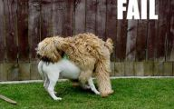 Funny Dog Fails 26 Widescreen Wallpaper