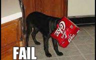 Funny Dog Fails 34 Hd Wallpaper