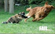 Funny Dog Fails 36 Free Wallpaper