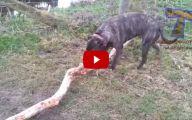 Funny Dog Fails 8 Widescreen Wallpaper