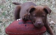 Funny Female Puppy Names 11 Free Hd Wallpaper